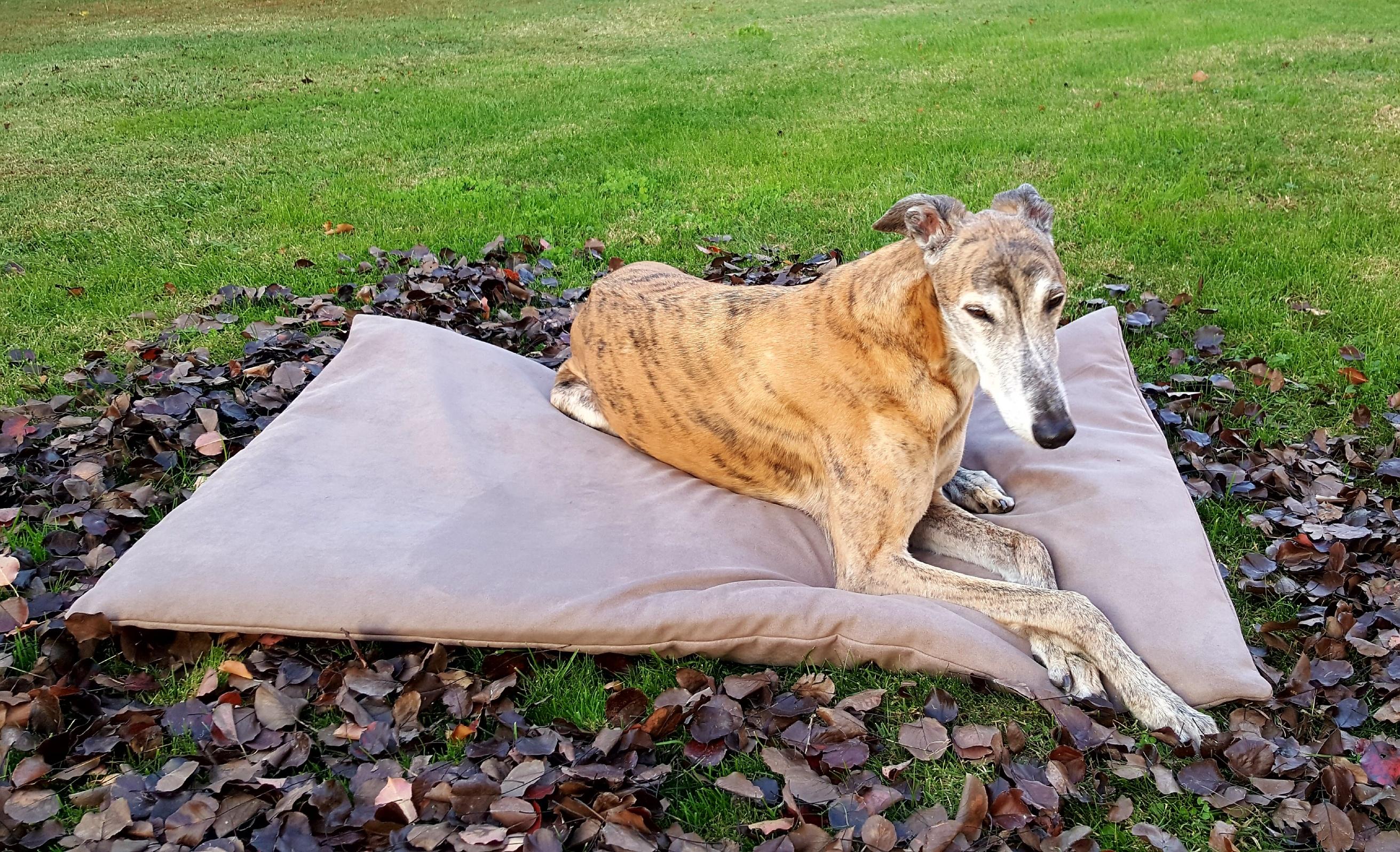 Cucce e cuscini personalizzati per cani e gatti.