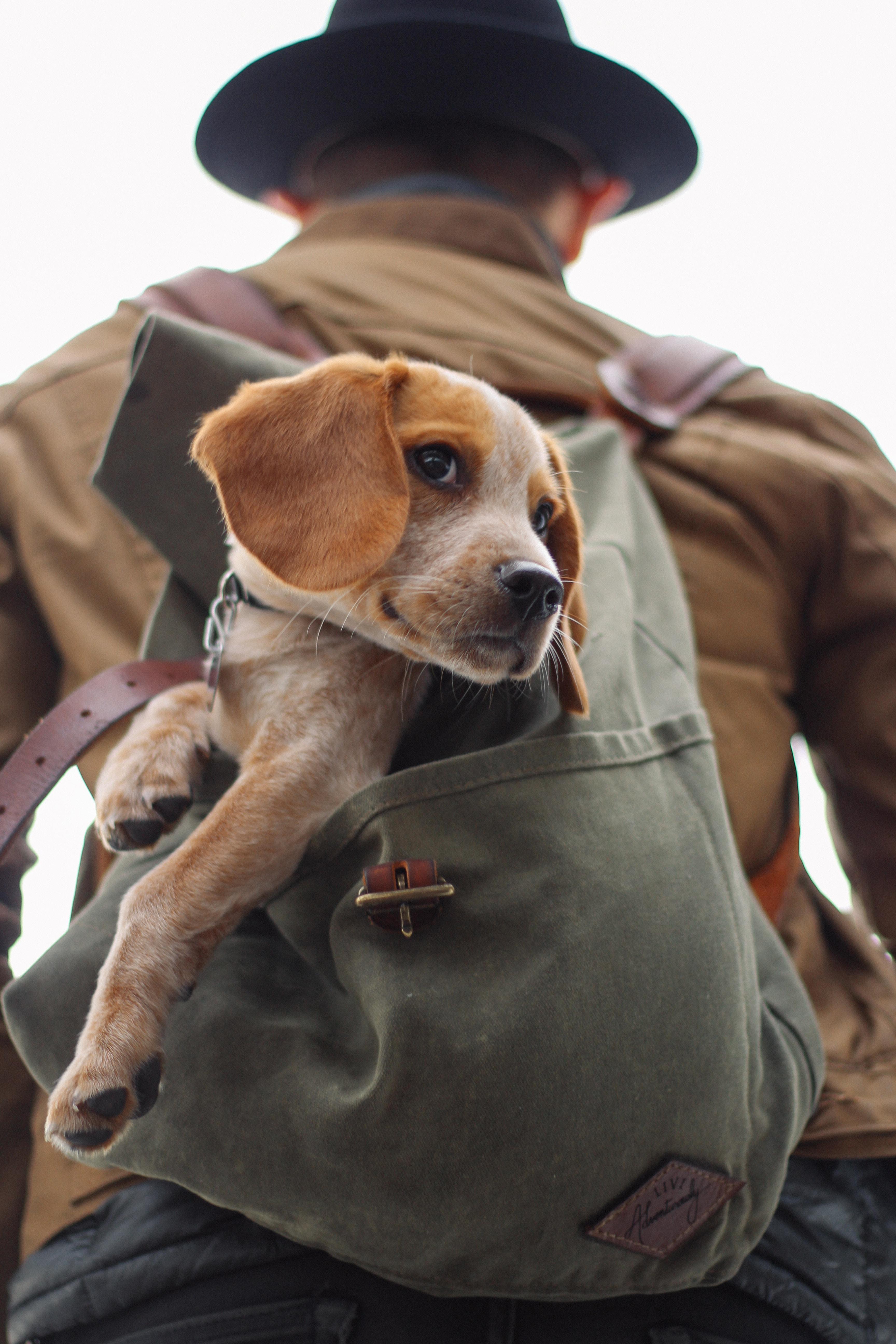 Viaggiare con il proprio animale, vero e proprio compagno di vita