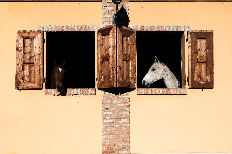 Francesco Ranoldi Fotografo. Vocazione e specializzazione.